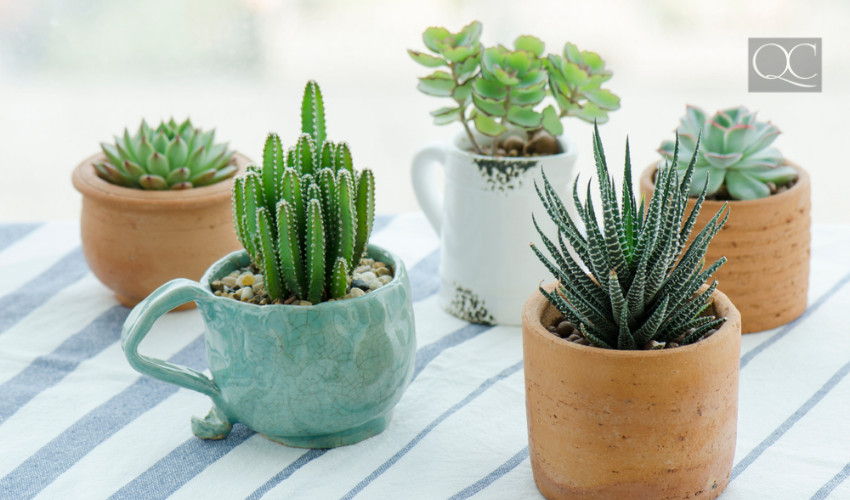 succulents and house plants to purify air in a temporary home