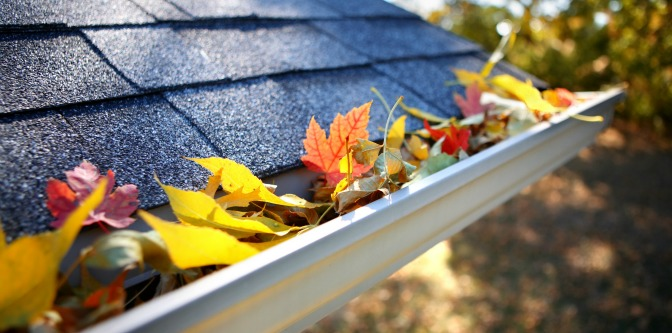 Creating curb appeal without leaves in rain gutter