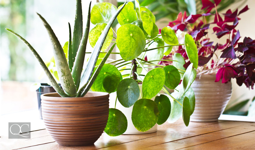 houseplants to purify home eco-friendly decorating