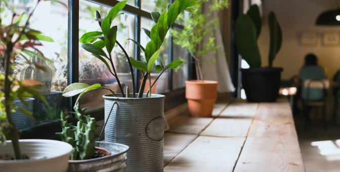 Windowsill with potted plants