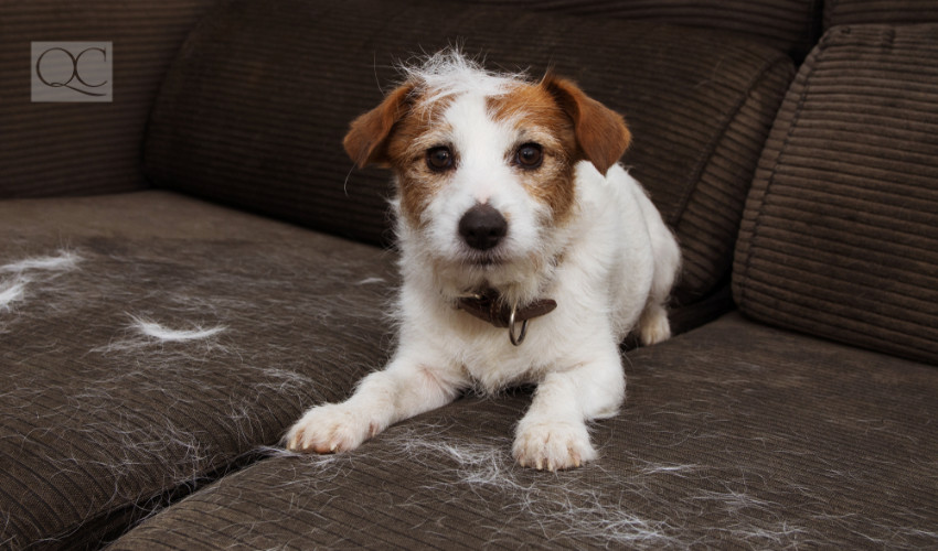 dog hair on couch of interior decorated home