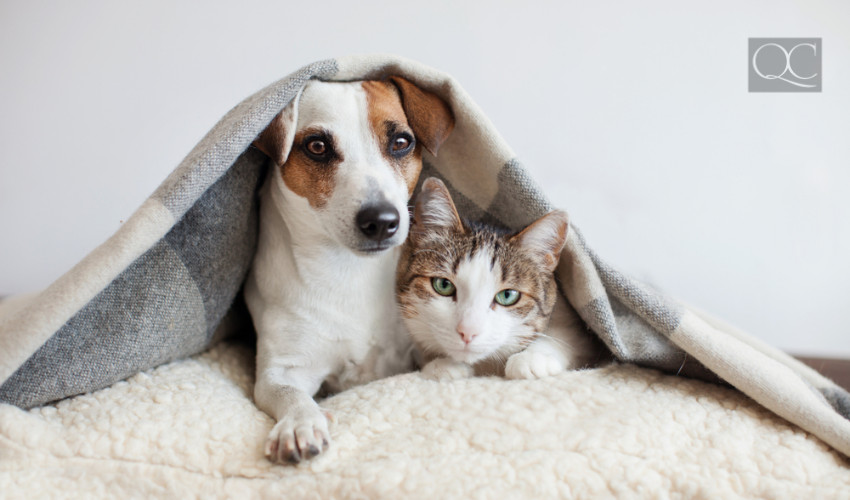cat and dog sleeping space can be decorated to be trendy