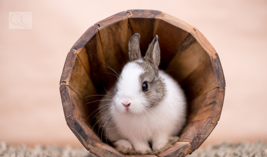 bunny pets decorate their cages