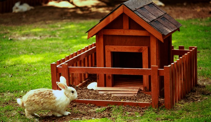 Bunny with fancy bunny house