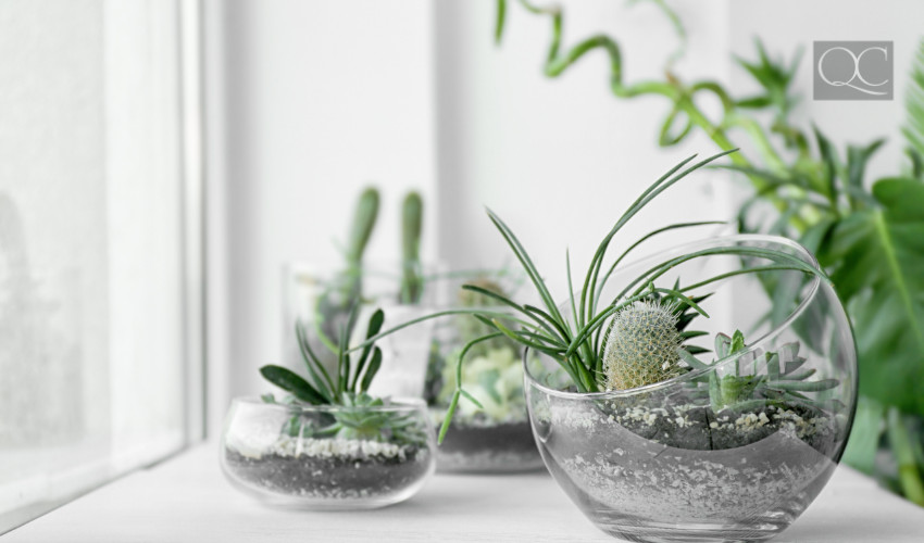 succulents and house plants to decorate home for interior decorating jobs