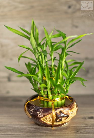 bamboo plants can help with feng shui design