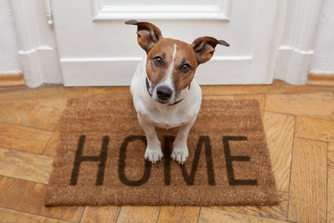 Get pet odours out of a home when staging a house