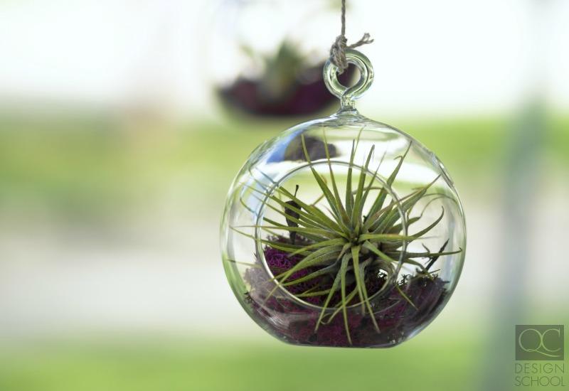 floating terrarium green decorating