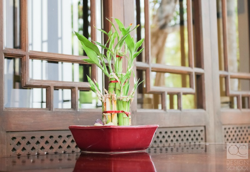adding plants for a fast feng shui cleanse