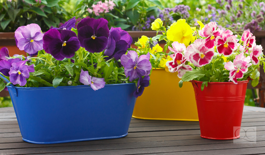 colorful potted plants to liven up curb appeal of a home - outdoor home staging