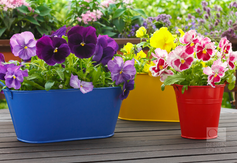 colorful plants with colorful pots