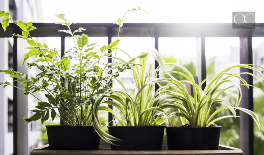outdoor plants for condo or apartment balcony exterior decorating