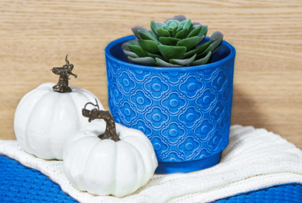 succulent in a pot and pillow, decor and interior element. color of the year 2020 classic blue pantone