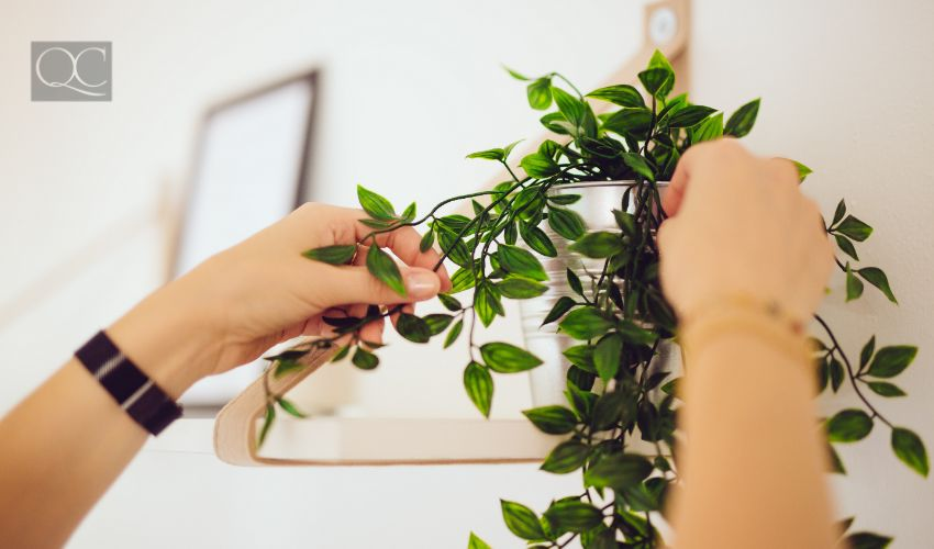 Home staging courses article last in-post image, home stager sets up a white apartment with a plant