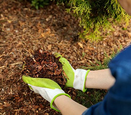 Placing garden bedding around plants with gloves