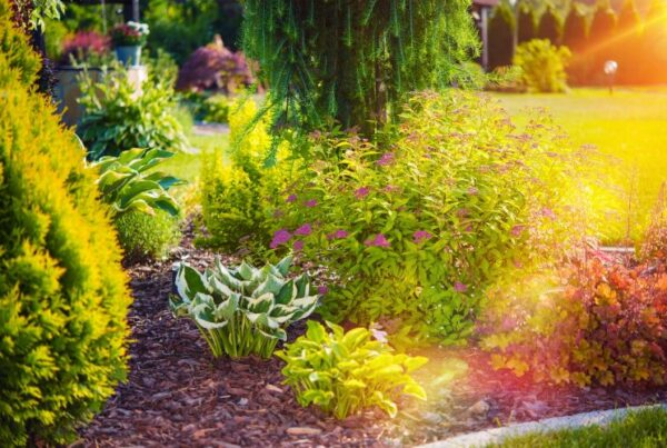 Feng Shui tips for summer article, July 06 2021, Feature Image